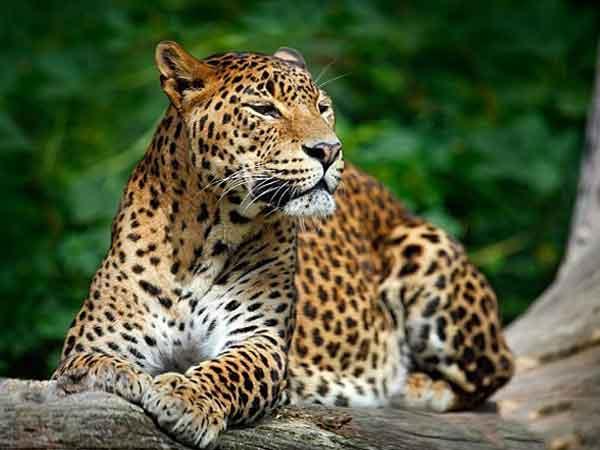 ردیاب و جی پی اس زیر پوستی حیوانات وحشی