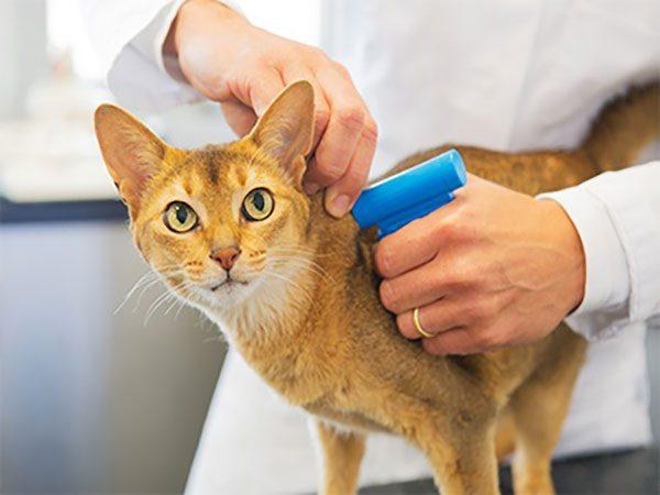 ردیاب زیرپوستی برای حیوانات خانگی