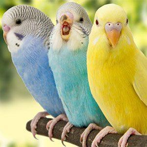 ردیاب کبوتر، امنیت پرندگان را اولویت قرار دهید