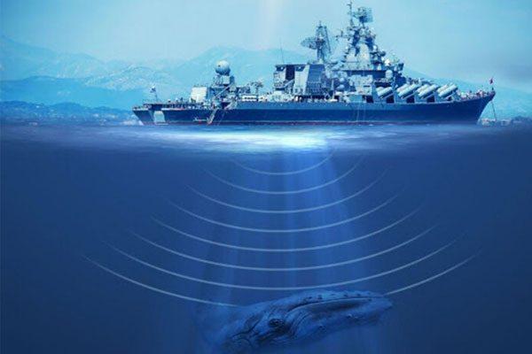 بررسی زندگی آبزیان، یکی از مهمترین کاربردهای ردیابهای صوتی