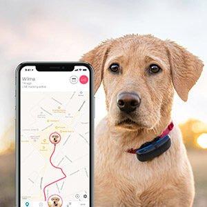 ردیاب سگ، دیگر نگران گم شدن حیوانات خانگی نباشید